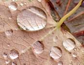 Macro of raindrops on fall leaf