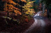 Adirondack dirt road in woods with bright fall trees