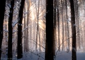 snowandsunrays-1-2