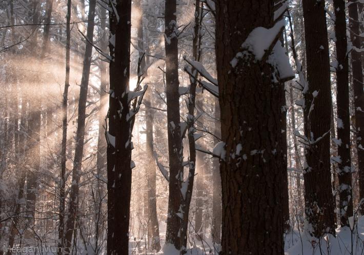 snowandsunrays-10