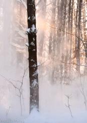 snowandsunrays-3