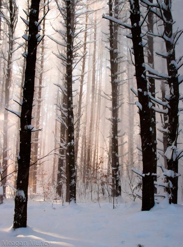 snowandsunrays-5