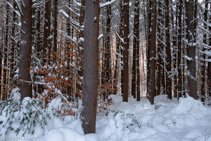 snowandsunrays2-1