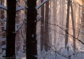 snowandsunrays2-4