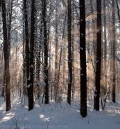 snowandsunrays2-5