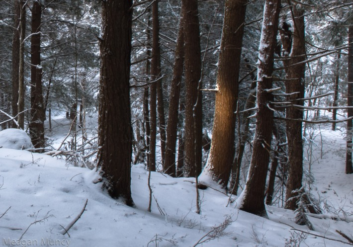 winterwalk2-9